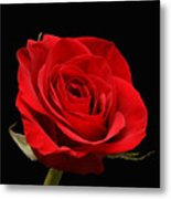 Red Rose On Black 1 Metal Print