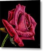 Red Rose On Black Metal Print