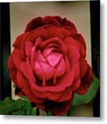 Red Rose  V2 Metal Print