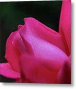 Red Rosebud Raindrops Metal Print