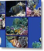 Red Sea Collage Metal Print
