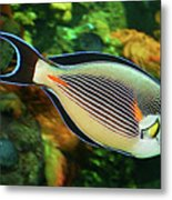 Red Sea Fish Metal Print