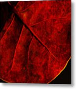 Red Sea Grape Metal Print