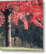 Red Shade Tree Metal Print