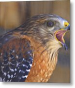 Red Shoulder Hawk Metal Print