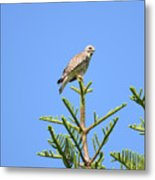 Red-shouldered Perch Metal Print