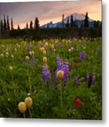 Red Sky Meadow Metal Print