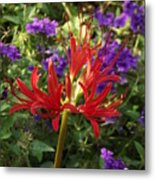 Red Spider Lily Metal Print