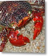 Red Spotted Crab Metal Print