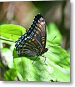 Red-spotted Purple 4172 Metal Print
