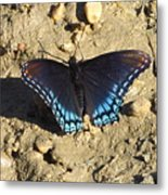 Red Spotted Purple Astyanax Metal Print