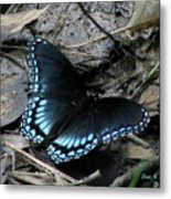 Red Spotted Purple Swallowtail Butterfly Metal Print