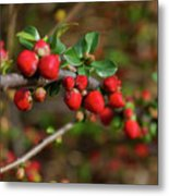Red Spring Buds Metal Print