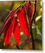 Red Sumac Leaves Metal Print