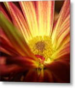 Red Sunflower 3 Metal Print