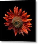 Red Sunflower On Black Metal Print
