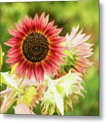 Red Sunflower, Provence, France Metal Print