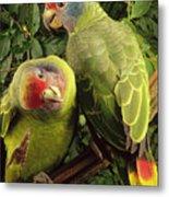Red-tailed Amazon Amazona Brasiliensis Metal Print