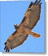 Red Tailed Hawk In Flight Metal Print by Wingsdomain Art and Photography