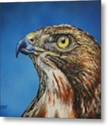 Red-tailed Hawk......honor Metal Print