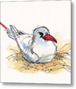 Red-tailed Tropicbird On Aitutaki Metal Print