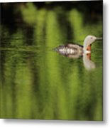 Red Throated Loon Metal Print