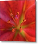 Red Tiger Lily Metal Print