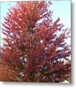Red Tree In The Fall Metal Print