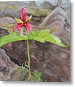 Red Trillium In The Spring  Metal Print