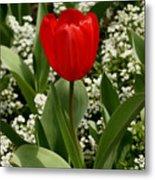 Red Tulip 09 Metal Print
