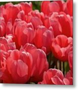 Red Tulip Buds Crest The Earth Metal Print