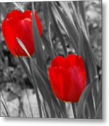 Red Tulip Duo Metal Print