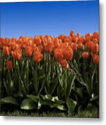 Red Tulip Garden Metal Print