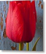 Red Tulip Metal Print by Garry Gay