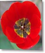 Red Tulip In 3d Metal Print