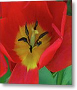 Red Tulip Trio Metal Print