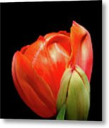 Red Tulip With Bud Metal Print