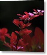 Red Twilight Metal Print