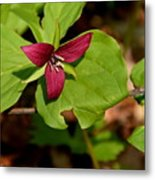 Red Upright Trillium Metal Print