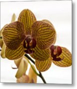 Red Veined Orchid Metal Print