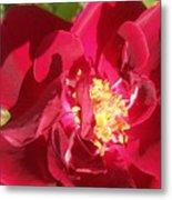 Red Velvet Roses Metal Print