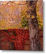Red Vine With Maple Tree Metal Print