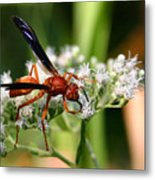 Red Wasp On Lace Metal Print