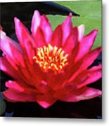 Red Water Lily - Palette Knife Metal Print