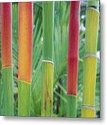 Red Wax Palm Stalks Metal Print