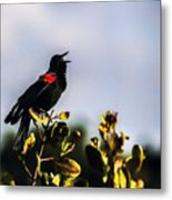 Red Wing Black Bird  Metal Print