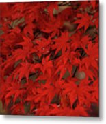 Red With Envy Metal Print