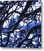 Red Woodshed Metal Print