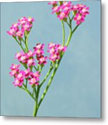 Red Yarrow Metal Print
