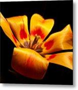 Red-yellow Tulip 1 Metal Print